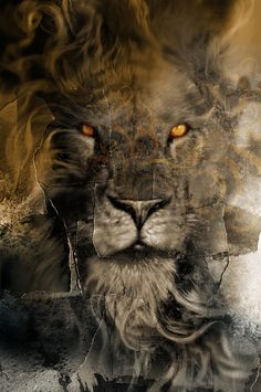 You know how the lion is the king of the jungle Jesus is the same thing of the universe! The Animals, Nature Animals, Lion Pictures, Animal Pictures, Lions Live, Lion Tattoo Sleeves, Lion Tattoo Design, Lion Painting, Lion Wallpaper