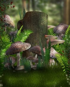 Mushrooms like little fairy houses.