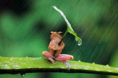 Cute but Real Frogs | Cute Frog Umbrella
