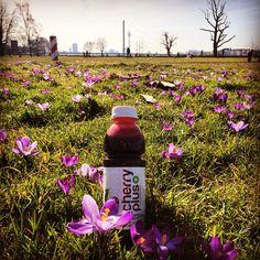 Die sonne lacht. Viel Spaß draußen! #cherryplus #sauerkirsche #montmorency #natuerlichmehr #vegan #frühling #spring #springtime #cherry #plus #natuerlich