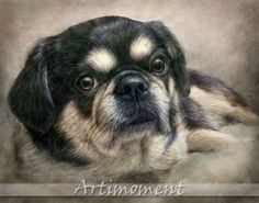 For more, please visit www.artimoment.com  Custom Portrait, Custom Pet Portrait, Personalized Dog Painting, Custom Digital Dog Portrait, Custom Tibetan Spaniel Portrait, Artimoment