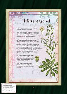 Hirtentäschel - Hirtentäscheltee - New Ideas Healing Herbs, Medicinal Plants, Natural Healing, Home Greenhouse, Greenhouse Gardening, Herbal Witch, Winter Party Themes, All About Plants, Pallets Garden