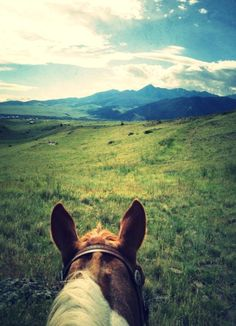 Wind in the Willows Ranch Horse Ears, Happy Trails, Trail Riding, Wild West, Country Life, Ranch, Horses, Mountains, Feathers