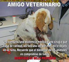 Por favor hacernos la vida mas facil a los que salvan y salvamos animales,todos debemos poner de nuestra parte ni ellos ni nosotros tenemos la culpa de lo que hacen a nuestros pobres animales ayuden ustedes tambien,gracias.