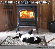 Funny Cat Pictures With Captions | description funny cat pictures roasts by fire funny cat pictures ...