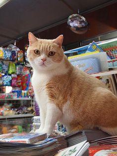 paper bag & string: Famous Newsstand Cat in Hong Kong: Meet Brother Cream (VIDEO)