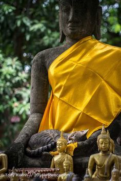 While humans seek enlightenment on the way to nirvana, these cats seen sleeping in the laps of Buddha statues seem to be seeking a warm place to chill out. I Love Cats, Big Cats, Cool Cats, Cats And Kittens, Ragdoll Kittens, Bengal Cats, White Kittens, Black Cats, Kitty Cats