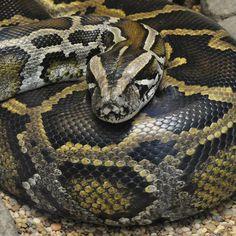 #CAMEROUN :: Morsures de serpents : le sérum antivenimeux se fait rare :: CAMEROON - camer.be: camer.be CAMEROUN :: Morsures de serpents :…