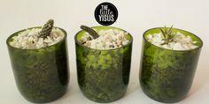 Macetas para cactus hechas con botellas recicladas