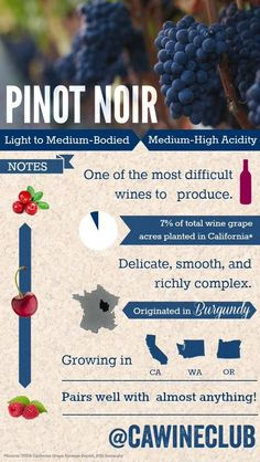 Pinot Noir - Learn more about this favorite wine varietal here! Art Du Vin, Wine Facts, Wine Varietals, Pinot Noir Wine, Pinot Noir Grapes, Chateauneuf Du Pape, Wine Vineyards, Wine Education, Wine Guide