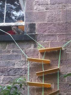 CAT -LADDERS: Scotland
