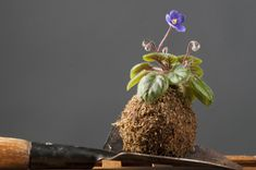 Kokedama plants are just so wonderfully charming and they add a magical touch to any garden. Hardware, Gardening, Touch, Make It Yourself, Pretty, Plants, Projects, How To Make, Diy
