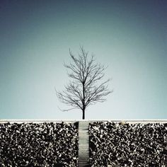 Loner | by David Foster Nass