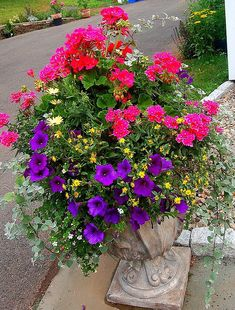 """container garden""  stunning! Outdoor Flowers, Outdoor Plants, Potted Plants, Outdoor Gardens, Container Flowers, Container Plants, Container Gardening, Purple Petunias, Red Geraniums"