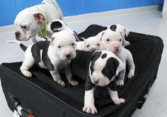 We can fit in the suitcase!