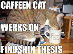 usa cat meme - Google Search
