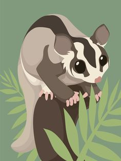 I decided to try another quick vector drawing. This one's a sugar glider I know I'm not so good at vector art, but this is all I can do until I find my tablet pen again Edit: I added a background-l. Sugar Glider Toys, Sugar Glider Cage, Sugar Gliders, Guinea Pig Toys, Guinea Pigs, Sugar Glider Bonding Pouch, Australian Nursery, Things With Faces, Exotic Fish