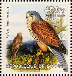 Common Kestrel stamps - mainly images - gallery format