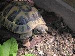 Le topic des plantes à tortues