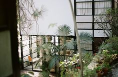 Eames House. Photo Mark Robinson