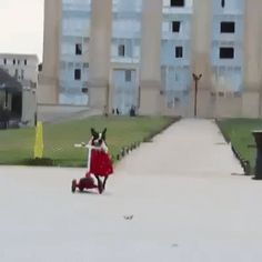 My dog is very smart and knows how to ride a scooter #dog #scooter #ride