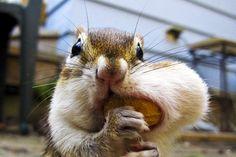 We feel you Mr. Squirrel.