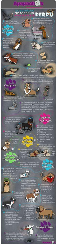Conoce los beneficios de tener un perro como mascota. Algunos son increíbles! Apapáchalo con lo mejor!