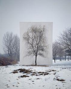 이명호 Tree #3 (2006)