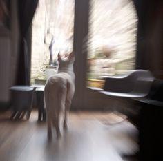 Snelheid (kat buiten)