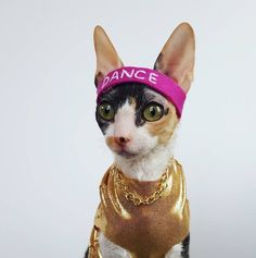This is my cat Beatrice. She's a tiny jazzy dancer!
