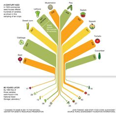 We used to have 307 kinds of corn 80 years biodiversity food infographic Monsanto Food System, Variety Of Fruits, National Geographic, Fruits And Vegetables, Veggies, Growing Vegetables, Food For Thought, Diversity, Real Food Recipes