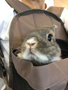 Bunny in a bag!