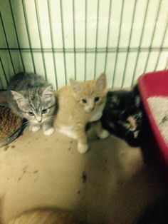 MAMA TIA'S FAMILY OF 4 HAVE BEEN RESCUED !! THE 1232ND, 1233RD, 1234TH AND 1235TH CATS RESCUED FROM CACC IN 2015 7 OCT @1PM ET - PULLED FOR RESCUE BY CAT ADOPTION TEAM, WILMINGTON, FOR FOSTER CARE