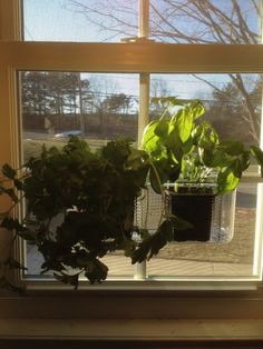 Window Herbs...use A Bathroom Suction Cup Organizer..attach To Kitchen