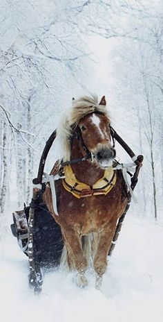 Nothing like a winter sleigh ride!!