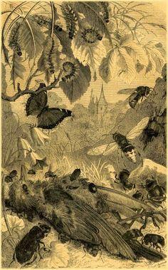 Entomologie Vieux livres A. E. Brehm