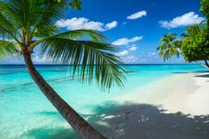 coco palm on tropical paradise beach with turquoise blue water and blue sky Beautiful Places To Travel, Beautiful Beaches, Wonderful Places, Beautiful Beach Pictures, Pink Sand Beach, Holidays Around The World, Sea And Ocean, Vacation Pictures, Tropical Paradise