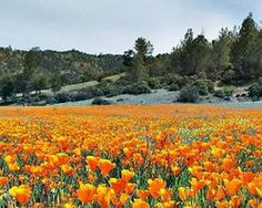 Protect Berryessa Snow Mountain - The Petition Site