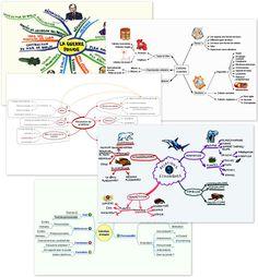 Exemples de Mind Maps