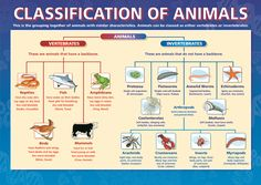 Science Fun Party: Investigate the Animal Kingdom: Vertebrates & Invertebrates…