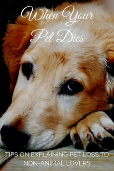 The Eternal Gift; Coping With the Grief of Losing a Beloved Animal