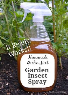 s 12 genius hacks for a pest free garden, pest control, Spray garlic and mint over the leaves