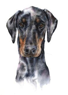 Pet portrait of a Doberman painted by watercolour artist Jane Davies