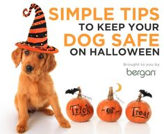Keep your dog safe with these simple and effective tips for Halloween.
