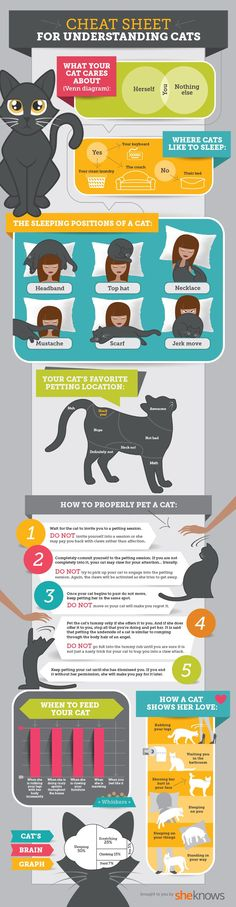 Can't understand cats? This diagram breaks it down in the simplest terms.
