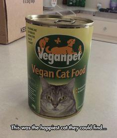 Cats'+Reaction+To+Vegan+Food