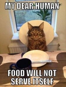 Food will not serve itself! LOLcats #Funny #Cats