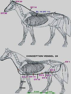 engl_acuhorse_print Horse Clothing, Clothes Horse, Horses For Sale, Acupressure, Horse Stuff, Infographics, Massage, 1, Animaux