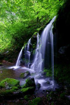 猿壺の滝 Sarubo falls #Green #緑