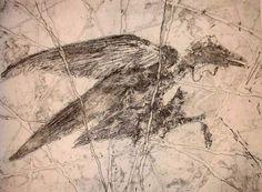 seagull2_saf.jpg
